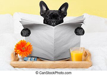 læse avis, hund