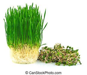 lé, wheatgrass, zöld, retek