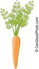 légume, carotte, isolé, white.