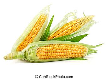 légume, frais, maïs, feuilles vertes