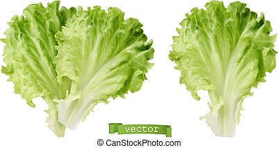 légume, lettuce., feuille, 3d, vecteur, réaliste