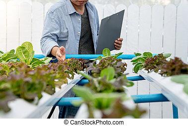 légumes, paysan, farm., hydroponic, qualité, vérification, quantité