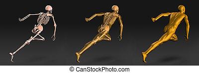 lékařský osvětlení, o, lidské tělo, a, ostatky