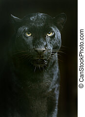 léopard, amur, naturel, sien, habitat