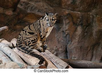 léopard, portrait, haut fin, brouillé