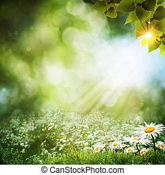 léto, abstraktní, květiny, grafické pozadí, sedmikráska