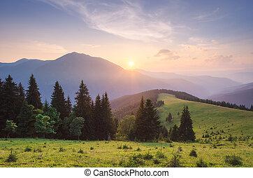 léto, krajina, v, východ slunce, od hora