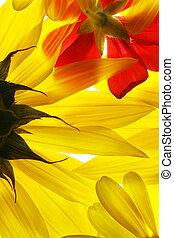 léto, květiny, červené šaty luácký, grafické pozadí.