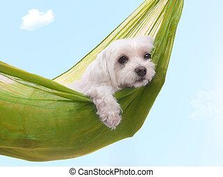 léto, líný, pes, dazy, den