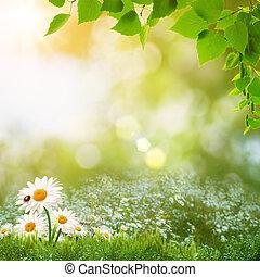 léto, louka, blbeček kráska, abstraktní, den, krajina