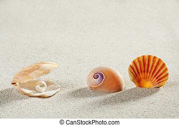 léto, loupat, prázdniny, perla, škeble, grafické pozadí, pláž