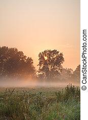 léto, mlhavý, východ slunce