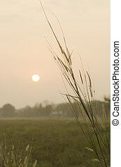 léto, nezkušený, západ slunce peloton