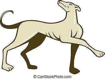 lévrier, chien, dessin animé, regarder, marcher, haut