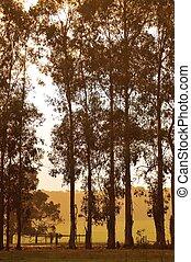 línea árbol, en, albaricoque, luz