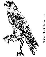 línea, halcón, arte