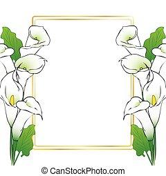 lírio calla, flores, cartão