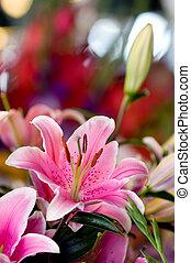 lírio cor-de-rosa