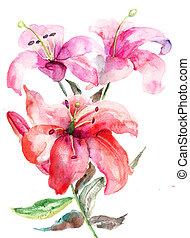 lírio, flores, aquarela, ilustração