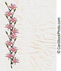 lírio, flores, borda, asiático