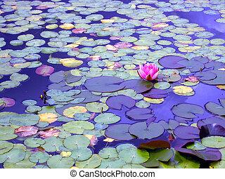 lírio lagoa