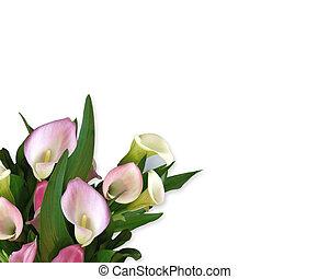 lírios calla, cor-de-rosa, borda
