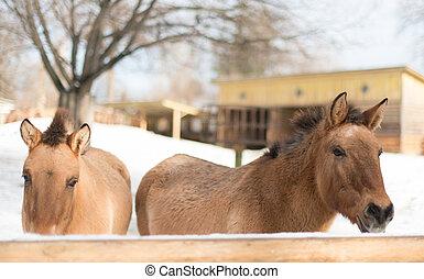 ló, -ban, a, állatkert