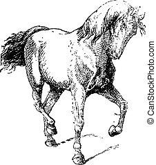 ló kíséret, szüret, metszés