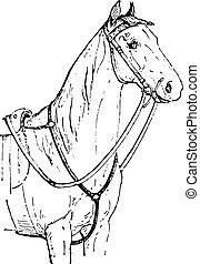ló, láda, szüret, engraving.