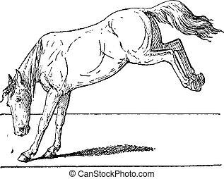 ló, megrúg, szüret, engraving.
