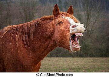 ló, nevető