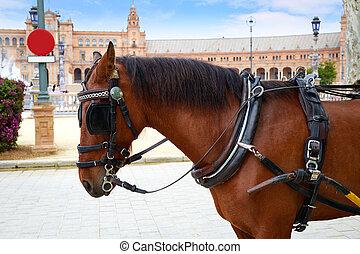 ló, sevilla, köztér, ellen-, seville, andalusia, espana