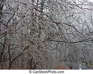 lód, drzewa