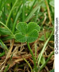 lóhere, four-leaf