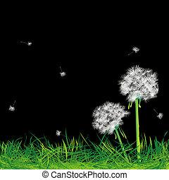 löwenzahn, gras, nacht