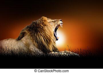 løve, på, den, baggrund, i, solnedgang