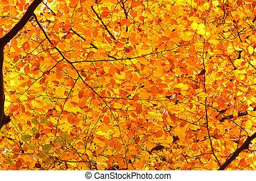 løvværk efterår, baggrund