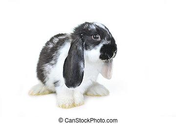 l beautiful rabbit - Small beautiful rabbit on white...
