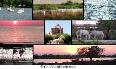 Camargue landscapes, flamingos and white horses