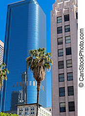 LA Downtown Los Angeles Pershing Square palm tress and skyscrapers.vertical photo;