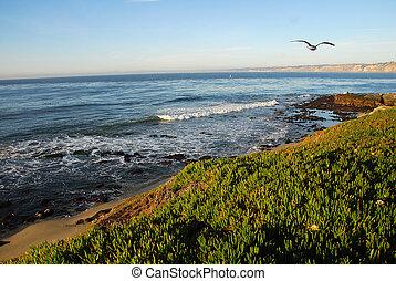 la jolla, カリフォルニア海岸