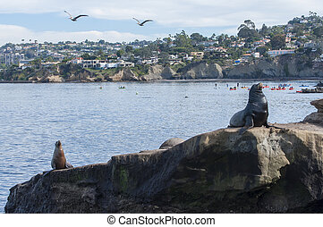 La Jolla Cove in California - Activity abounds with seals,...