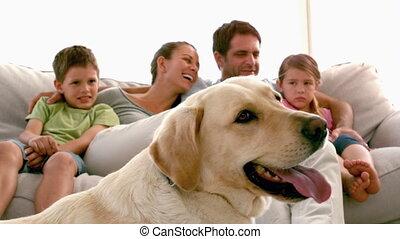 la, leżanka, rodzina, posiedzenie