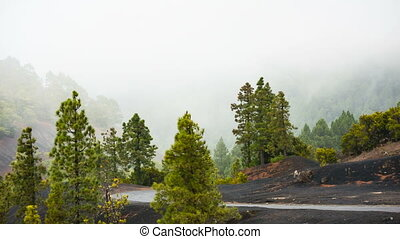 La Palma Forest And Clouds, Spain - Tradewind clouds pushing...