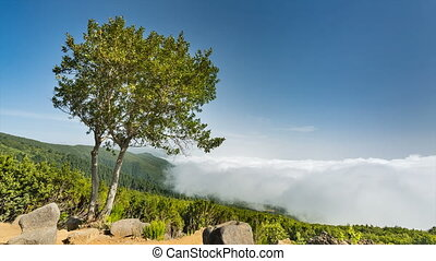 La Palma Tree And Clouds Timelapse, Spain - Timelapse...