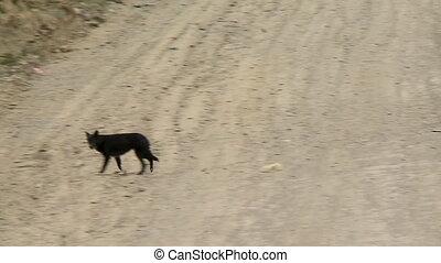 la, poussiéreux, route, chien, âme, paz, noir, bolivie