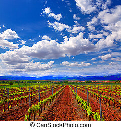 La Rioja vineyard fields in The Way of Saint James - La...