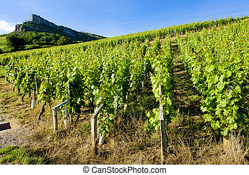 Burgundy - La Roche de Solutr� with vineyards, Burgundy,...