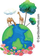 la terre, deux, au-dessus, girafes
