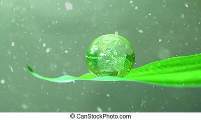 la terre, feuille, vert, neiger, sur